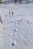 Animal footprints in the snow. Russian winter Royalty Free Stock Photography