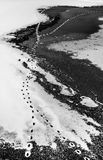 Animal footprints on top of snow and frozen lake Royalty Free Stock Images