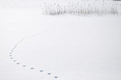 Animal footsteps Royalty Free Stock Image