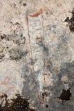 Animal fossil Royalty Free Stock Photos