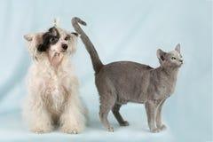 Animal friend Stock Photo