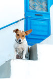 Animal-friendly hotel. Friendly dog by the traditional door, Lefkes village, Paros Royalty Free Stock Photography