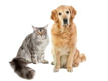 Animal friends Stock Images