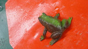 Animal frog water toy green Royalty Free Stock Photography