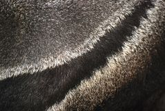 Animal fur Stock Photography