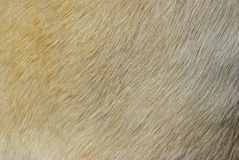 Animal fur. Close up picture on the animal fur, suitable as a background royalty free stock photos
