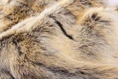 Animal fur Stock Image