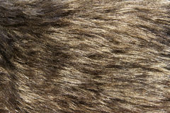 Animal fur. The background of animal fur stock photography