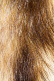 Animal Fur Stock Image