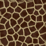 Animal Fur. And tileable texture Royalty Free Stock Photos
