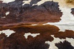 Animal fur Royalty Free Stock Images