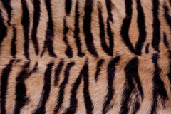 Animal Fur Background Royalty Free Stock Image