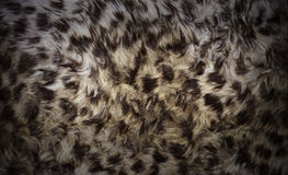 Animal fur background. Close-up of wild animal fur with dramatic vignetting Royalty Free Stock Photo
