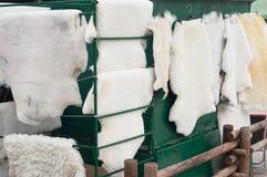 Animal fur drying. Drying of animal fur after skinning Royalty Free Stock Photos