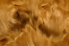 Animal fur  /III Royalty Free Stock Image