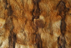Animal fur pattern Royalty Free Stock Images