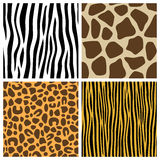 Animal Fur Seamless Patterns. Collection of four animal fur seamless patterns (zebra, giraffe, leopard, tiger), useful also as design elements for textures vector illustration