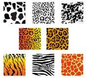 Animal fur and skin. Set of animal fur and skin patterns for design Royalty Free Stock Photo