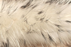 Animal fur texture background Royalty Free Stock Photos