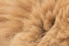 Animal fur texture background Stock Photo