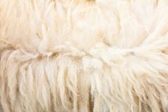 Animal fur texture Royalty Free Stock Photo