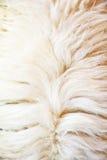 Animal fur texture Stock Image