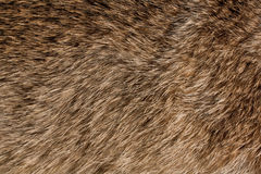 Animal fur texture Stock Photography