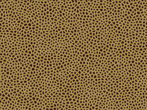 Animal fur texture- giraffe Stock Photos