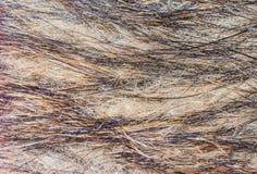 Animal fur texture gray black Stock Photography