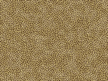 Animal fur texture- jaguar Royalty Free Stock Photo