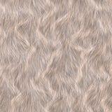 Animal fur texture Royalty Free Stock Image