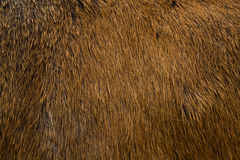 Animal fur texture Royalty Free Stock Photos