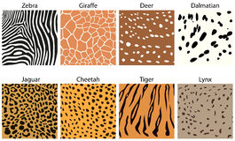 Animal fur textures Stock Photography