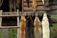 Animal furs hanging Royalty Free Stock Photos