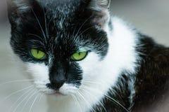 Animal - gato Imagem de Stock