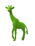 Animal giraffe shaped grass hedge on a white background Royalty Free Stock Photos