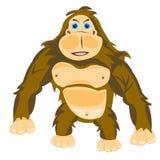 Animal gorilla Royalty Free Stock Image