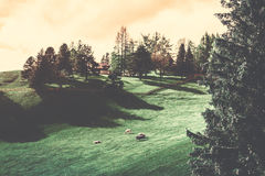 Animal on Grass Field Surrounded by Trees during Golden Hour Stock Images