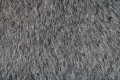 Animal Gray Fur Texture. As Wallpaper or Background Stock Image