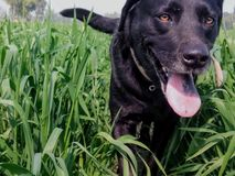 Animal in green grass stock image