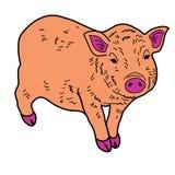 Animal guarro del ejemplo del extracto del diseño de la historieta del icono de la boa del cerdo Imágenes de archivo libres de regalías