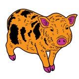 Animal guarro del ejemplo del extracto del diseño de la historieta del icono de la boa del cerdo Foto de archivo