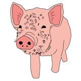 Animal guarro del ejemplo del extracto del diseño de la historieta del icono del verraco del cerdo Fotos de archivo
