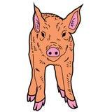 Animal guarro del ejemplo del extracto del diseño de la historieta del icono del verraco del cerdo Foto de archivo libre de regalías