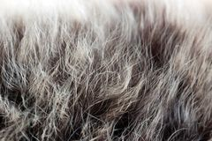 Animal hair, Royalty Free Stock Image