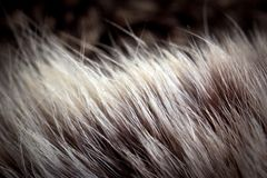 Animal hair, Royalty Free Stock Photography