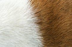 Animal hair Royalty Free Stock Photo