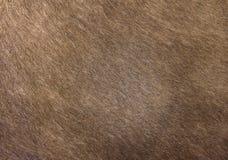 Animal hair skin texture Stock Photos