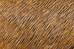 Animal Hair Texture Stock Images