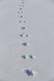 Animal hare tracks. Winter background minimalistic texture Royalty Free Stock Photo